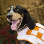 Picture of University of Tennessee Volunteers mascot Smokey