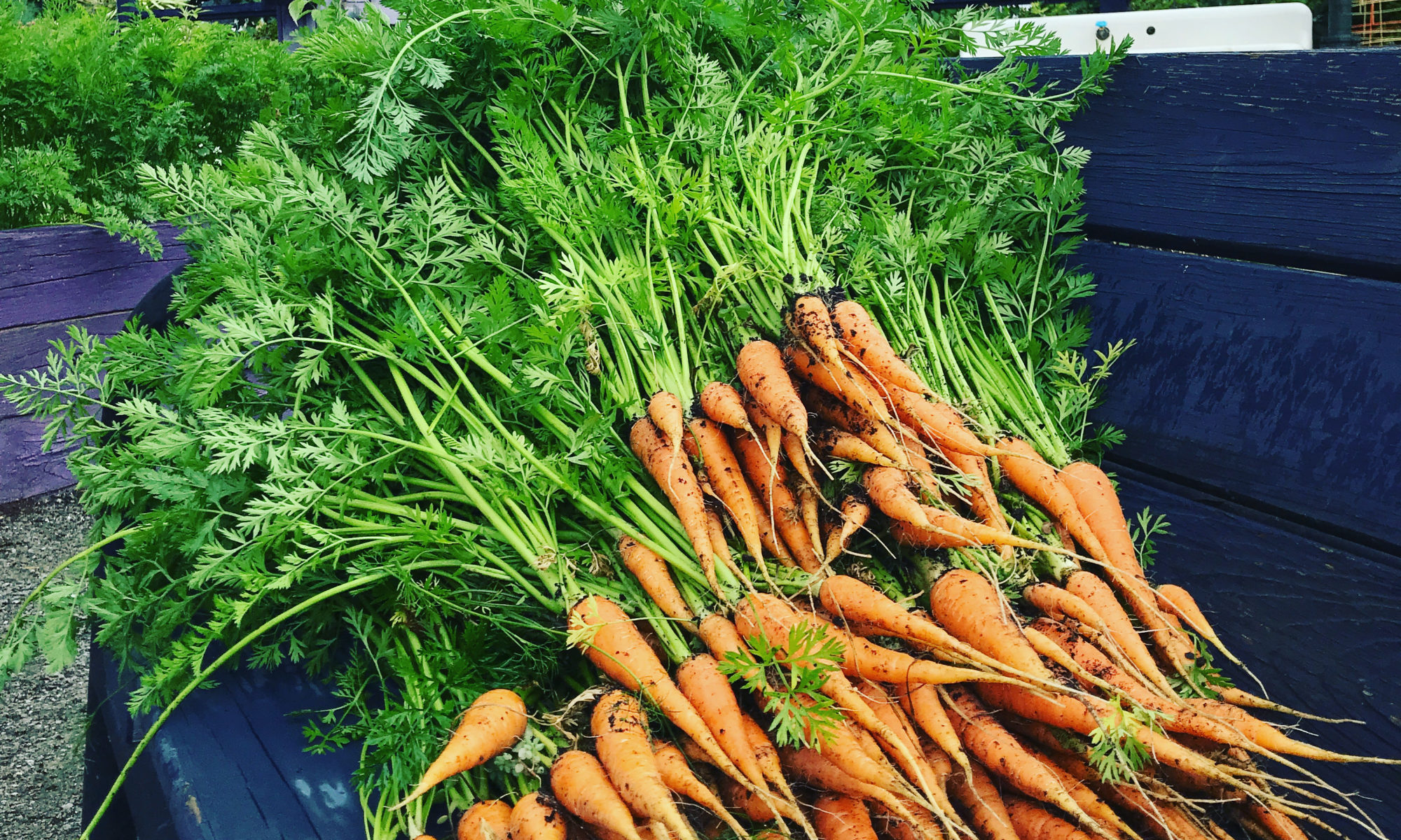 Picture of carrots in a truckbed
