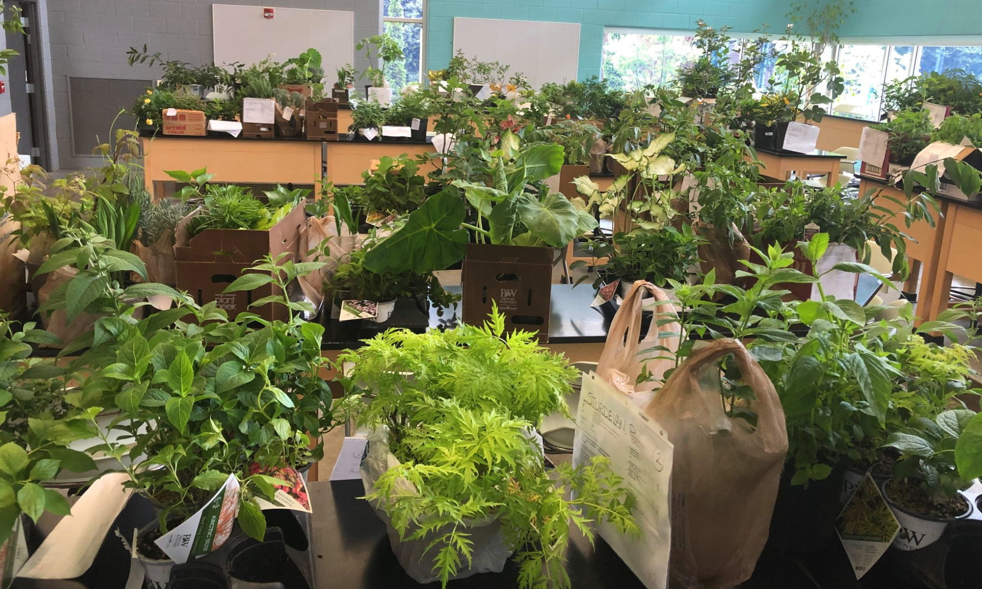 Plants arranged on a set of tables with price tags