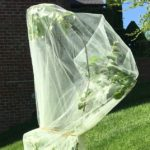 Wrapped Apple Tree