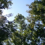 Photo of a tree canopy