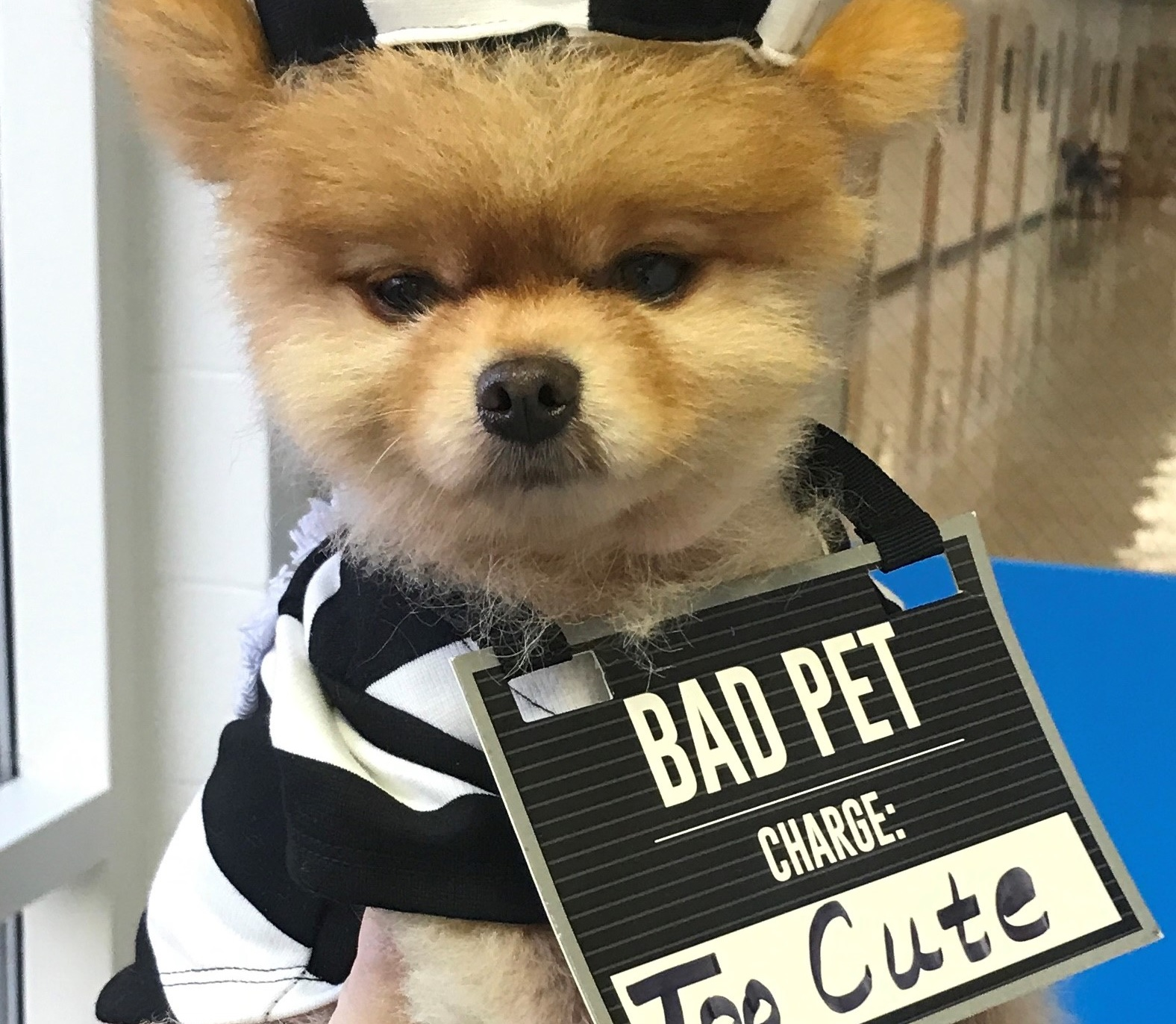 Small dog in a bad pet custome charged with being too cute